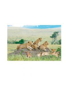 African Safari VBS Lion Backdrop