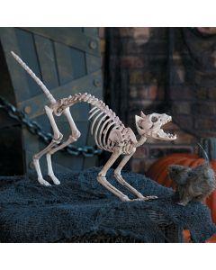 Halloween Skeleton Cat