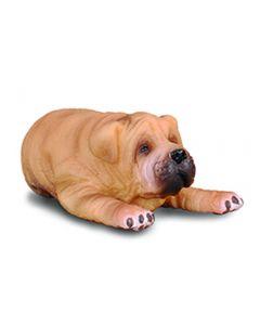 Shar Pei Puppy - Small