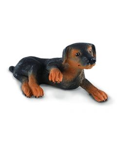 Doberman Pinscher Puppy - Small
