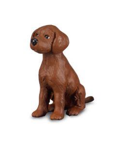 Irish Red Setter Puppy - Small