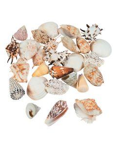 Mega Sea Shell Assortment