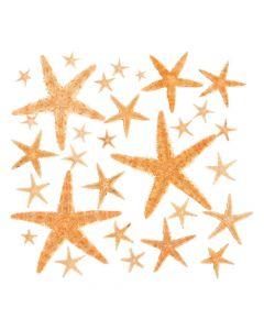 Natural Starfish Assortment