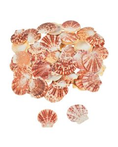Pecten Macarensis Sea Shells
