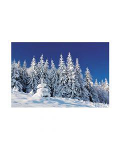 Winter Scene Backdrop